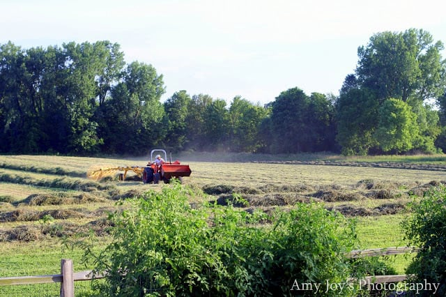 Raking hay on the farm on a hot day.