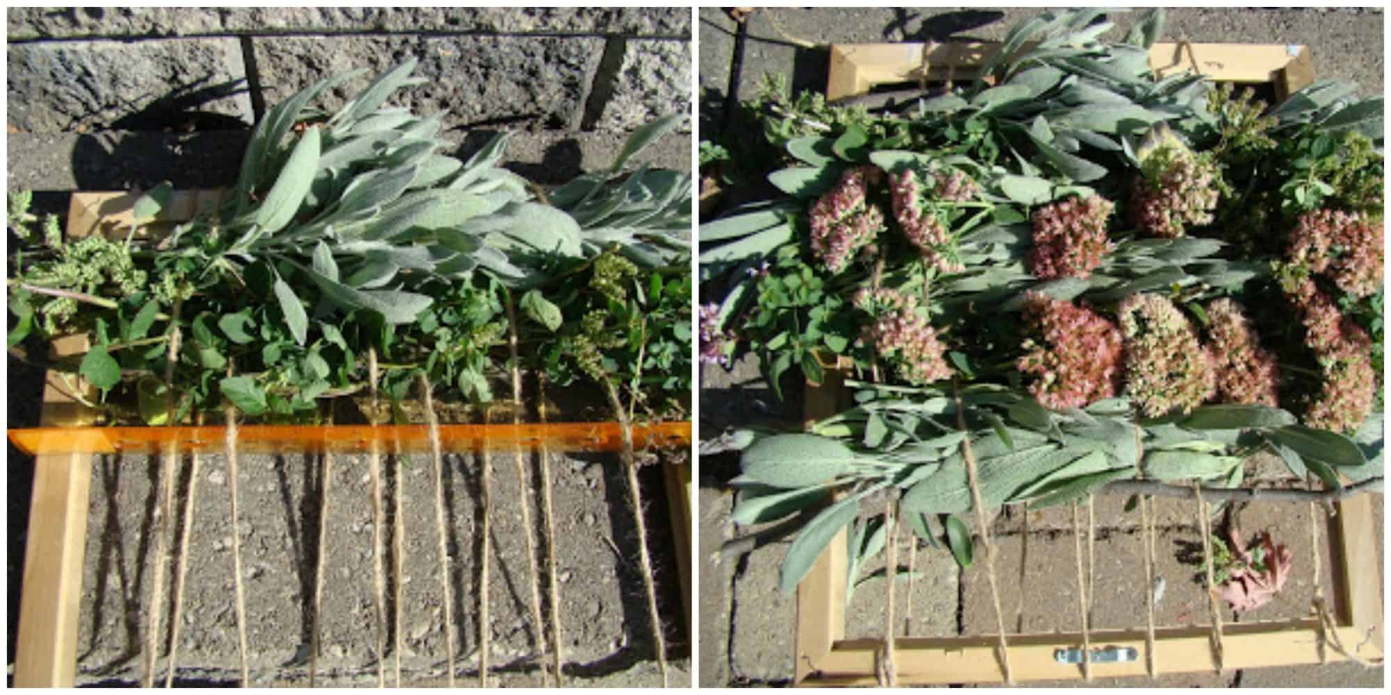 Edible Herb Weaving: Save Summer's Herbs for Winter's Soups, Stews. An herb weaving for drying