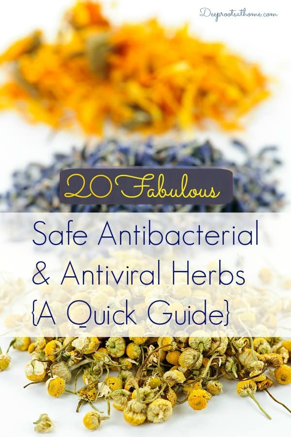 20 Safe Antibacterial and Antiviral Herbs {A Quick Guide}, Rosemary Gladstar's Herbal Recipes for Vibrant Health: Teas, Tonics, Oils, Salves, Tinctures, and Other Natural Remedies for the Entire Family, gentle and effective, Melissa officinalis, Candida albicans, yeast infections, healthy living, essential oils, making tea, infusion, tincture, syrup, infused oil, topical use, gourmet cooking, thyme, oregano, cinnamon, cloves, echinacea, garlic, peppermint, ginger, basil, dill, cilantro, tea tree, olive leaf, lemon balm, antiviral, antibacterial, anti-parasitic, anti-inflammatory, anti-fungal herbs, peppermint, usnea lichen, uva ursi, yarrow, astragalus, calendula, cranberry, cat's claw, mullein, elderberry, aromatic oils, dried herbs, herbal remedies, DIY, homemaking, recipes, home remedies