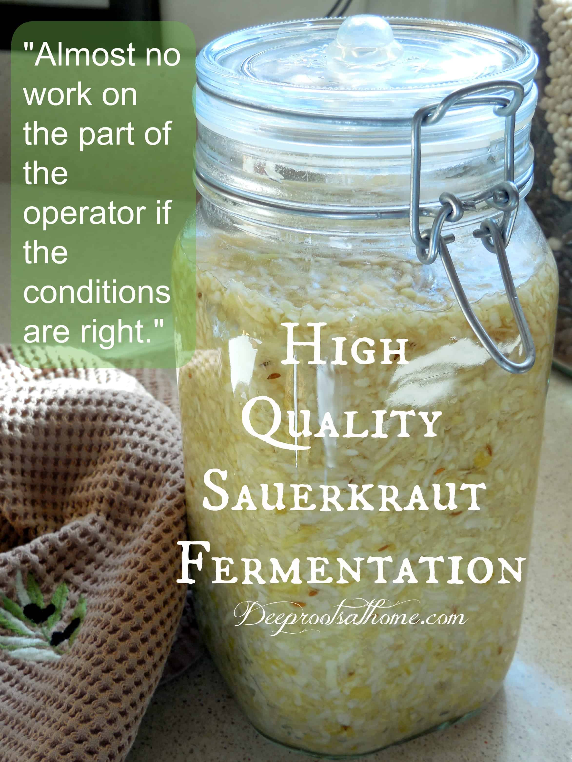 High Quality Sauerkraut Fermentation, ideal food, Sally Fallon, Nourishing Traditions, book, long sea voyages, Captain Cook, improve mood, food preservation, lacto-fermenting food, lactic acid bacteria, cabbage, digestible, Celtic sea salt, recipe, probiotic,