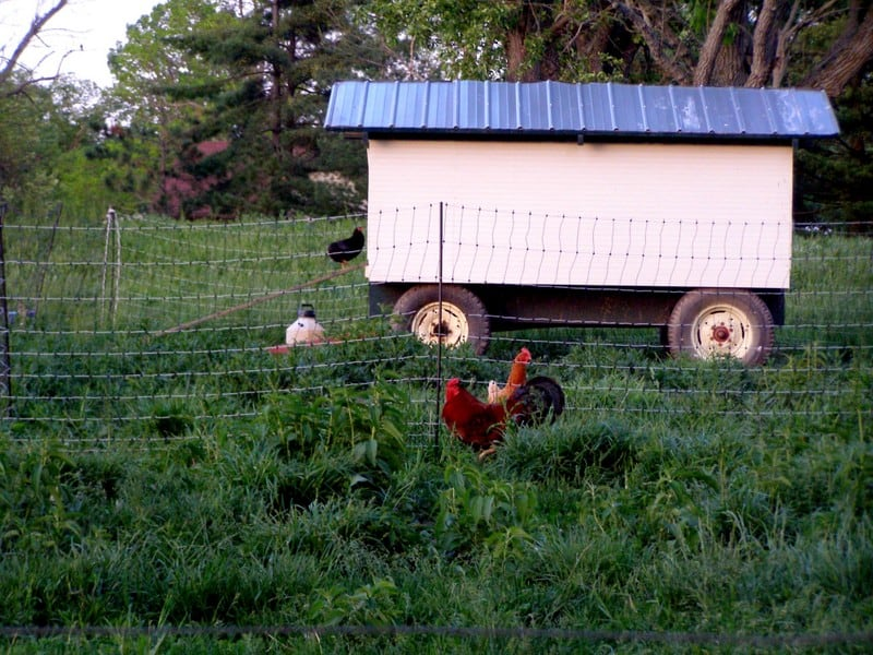 Our old chicken tractor at the farm