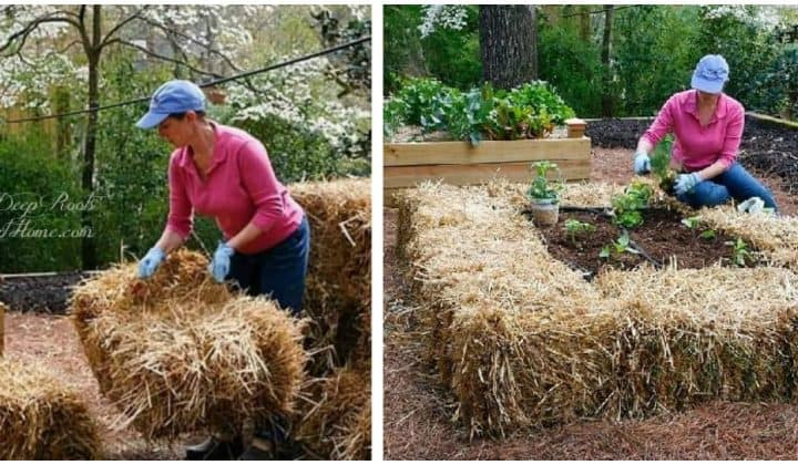 Straw Bale Urban Gardening: Ideas and Getting Started Right