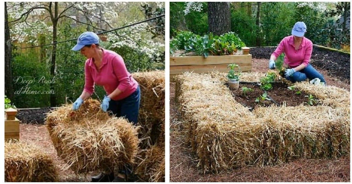 Straw Bale Urban Gardening: Ideas and Getting Started Right. woman moving a hay bale and palnting