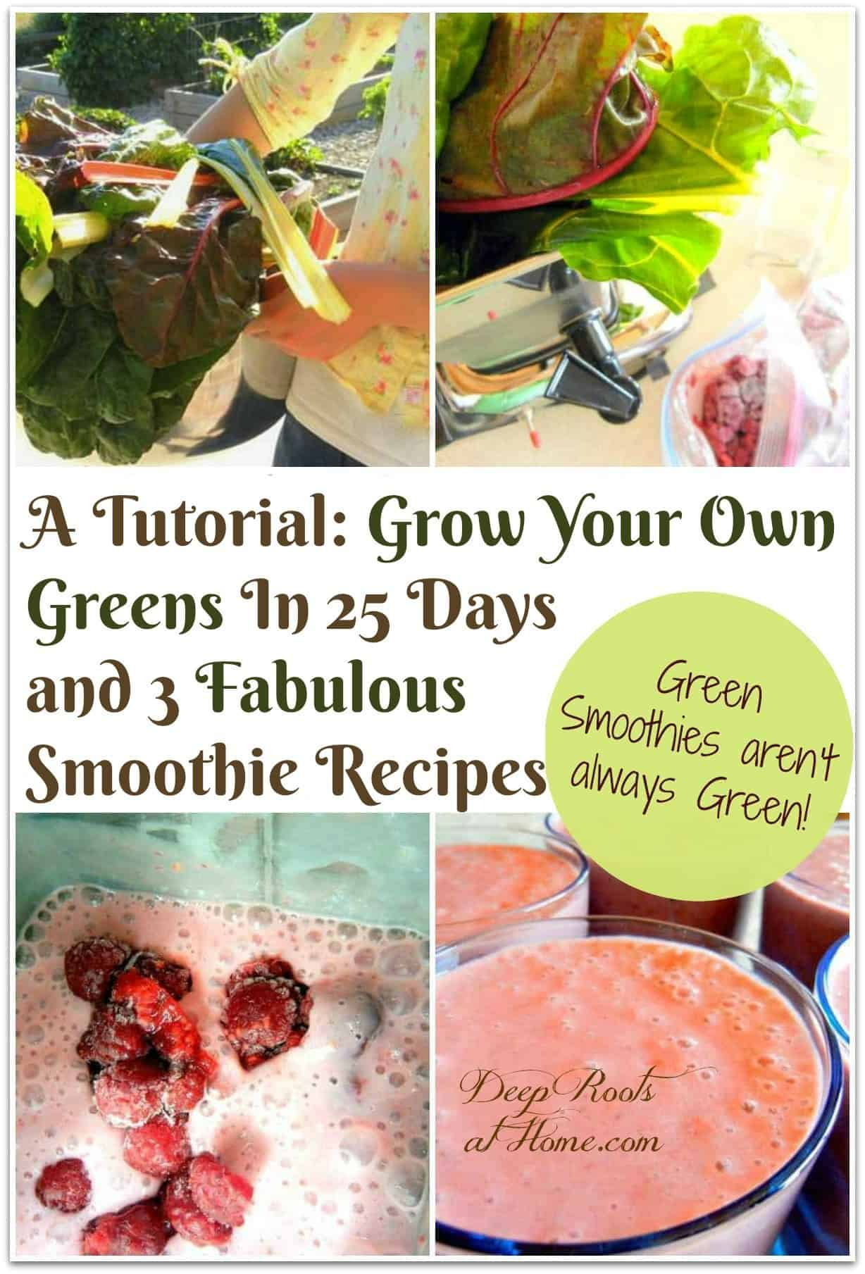 How to Grow Greens Spring or Fall in 25 Days & 3 Fab Smoothie Recipes. A collage of making green smoothies with fresh greens from the garden.