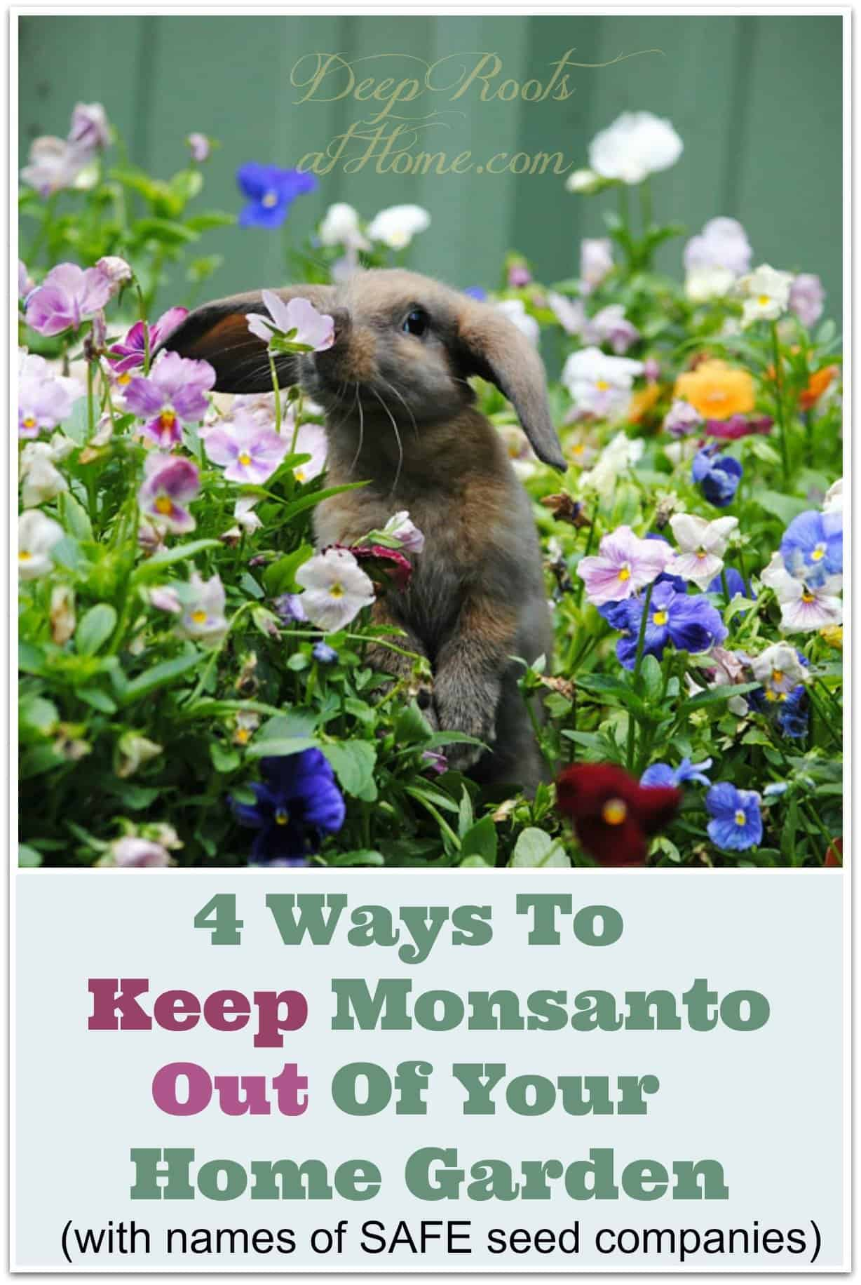 4 Ways To Keep Monsanto Out Of Your Home Garden. A bunny smelling a pansy flower.