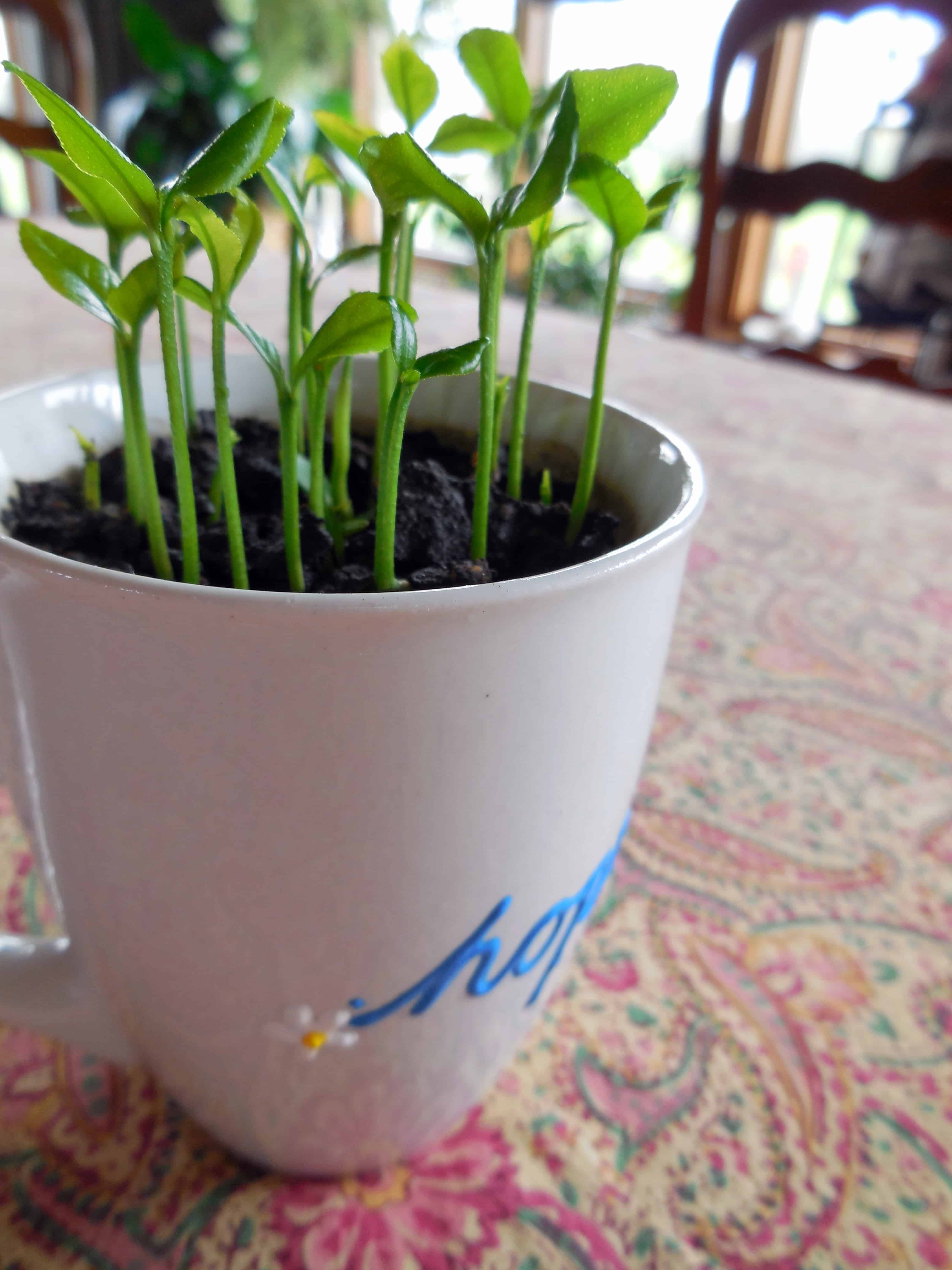 Deep Roots At Home Enriching The Soil Of Your Lifedeep