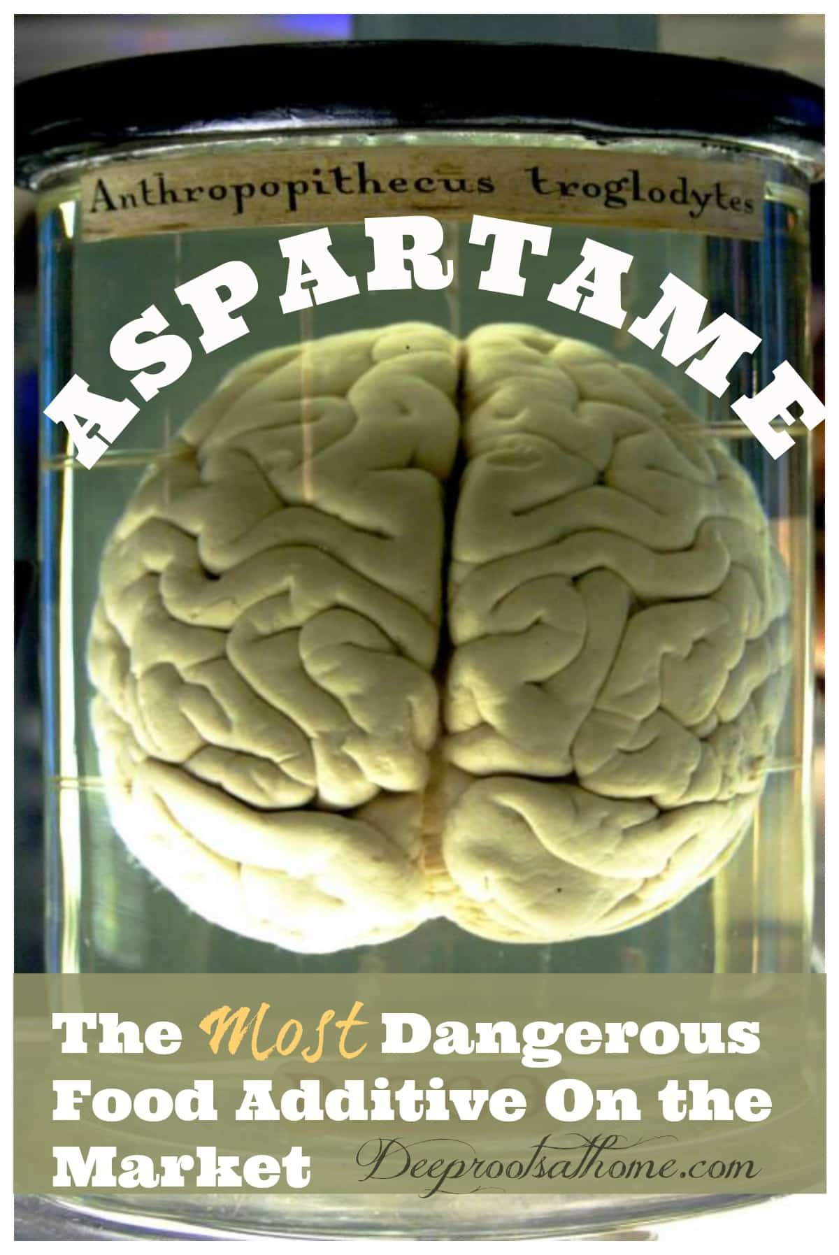 Aspartame: The Most Dangerous Food Additive On the Market, Aspartame affects and damages the brain. Image of a chimp brain in formaldehyde.