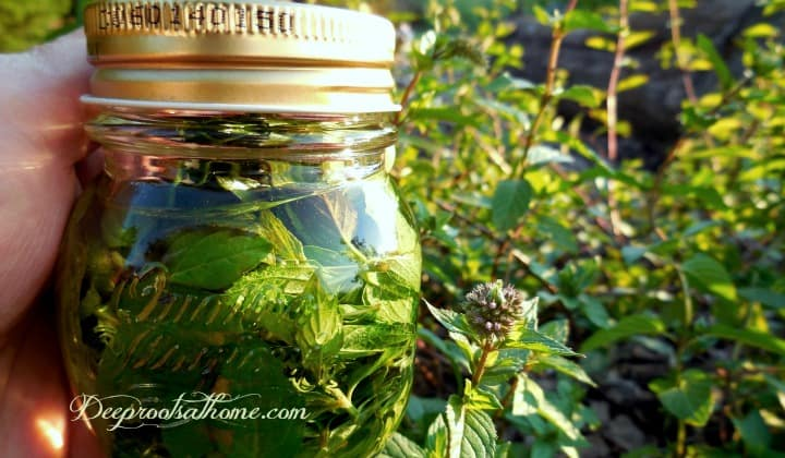 Two-Ingredient Homemade Mint Extract, DIY instructions,