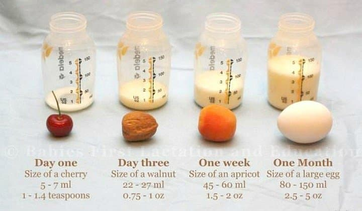 Visual: Know The Size & Volume Of Your Newborn's Stomach. An educational graphic to show how much a babies tummy hold on day 1, day 3, at one week and at one month.