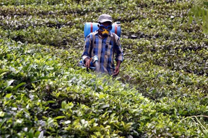 Chemicals and Pesticides Found In Popular Tea Brands & Tea Bags, spraying a tea crop, with chemicals