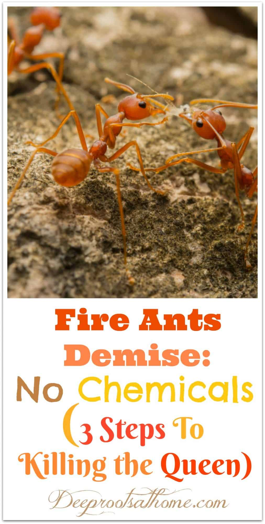 Fire Ants: Kill the Queen If You Do These 3 Steps. Fire Ants at their nest. Pin Image