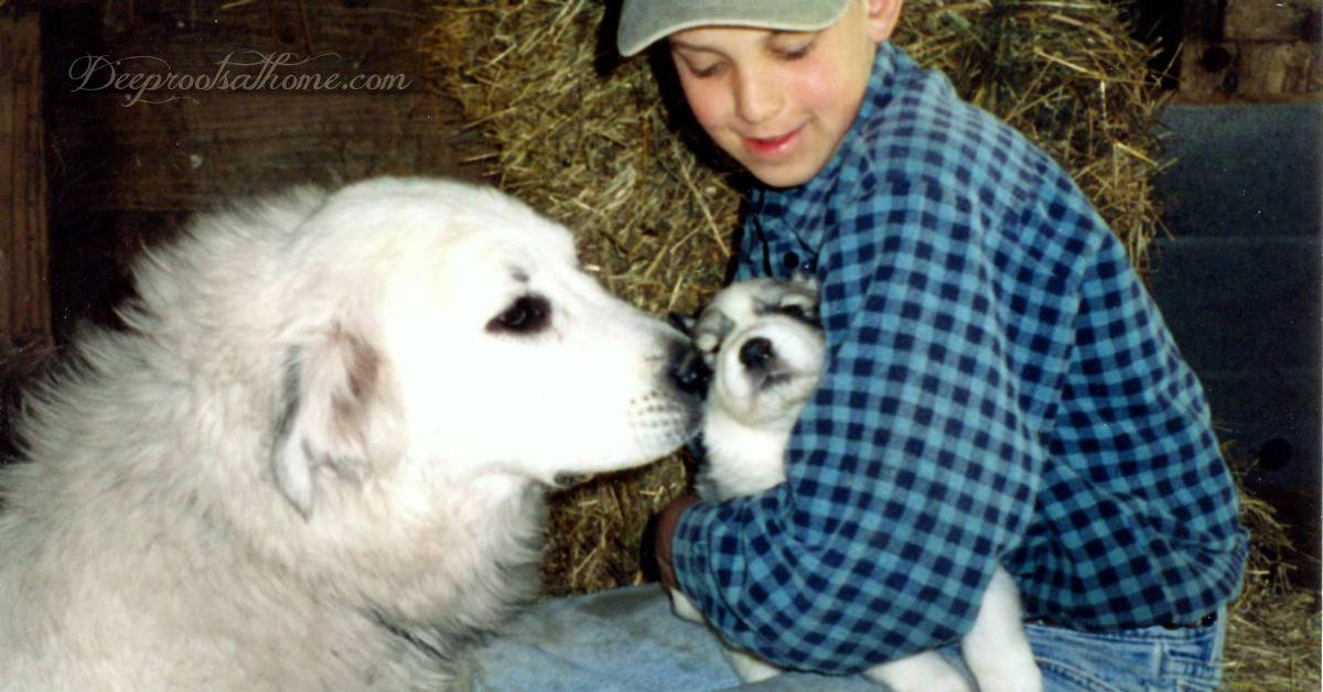 Training a Child is (just a bit) like Stressing Puppies. Photo of a 8 year old boy sitting on hay holding and stressing a little puppy while the Mama dog sniffs the puppy in his arms.