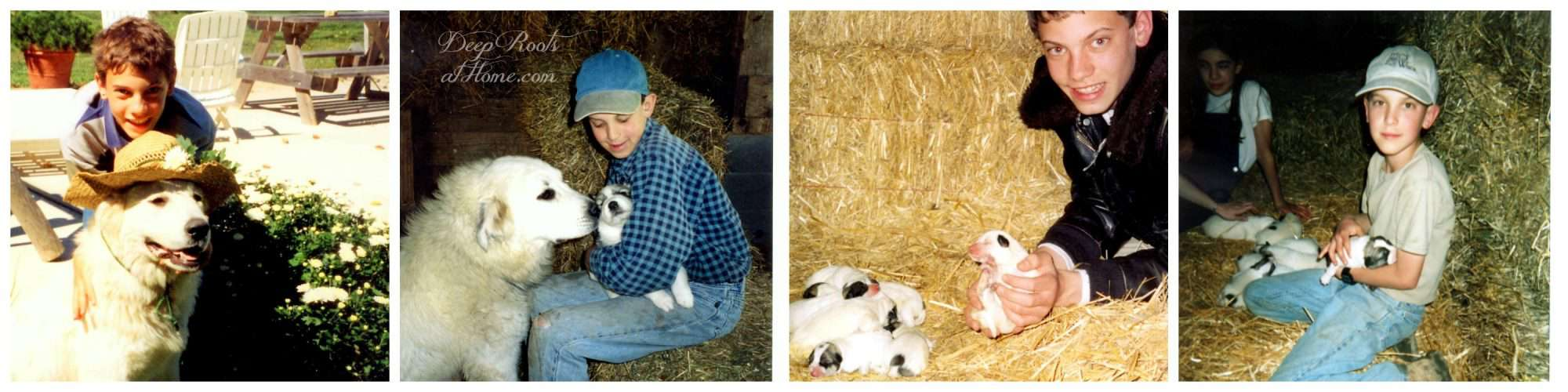 Are We Stressing Our Kids Enough? A collage of photos of out kids raising puppies for sale.