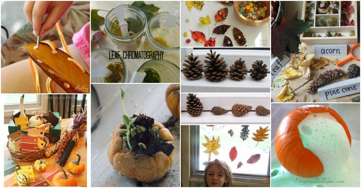 25 Fall Backyard Hands-on Crafts & Science Activities. A Collection of fall activities and experiments for preschool through grade 5.