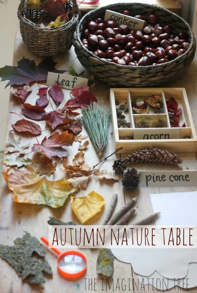 25 Fall Backyard Hands-on Crafts & Science Activities. An autumn nature table with leaves, acorns, buckeyes, pinecones, and pine needles.