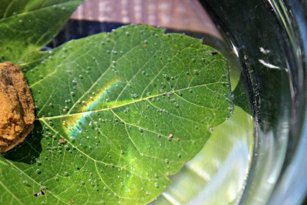 25 Fall Backyard Hands-on Crafts & Science Activities. A leaf breathing under water showing little air bubbles resting on the surface.