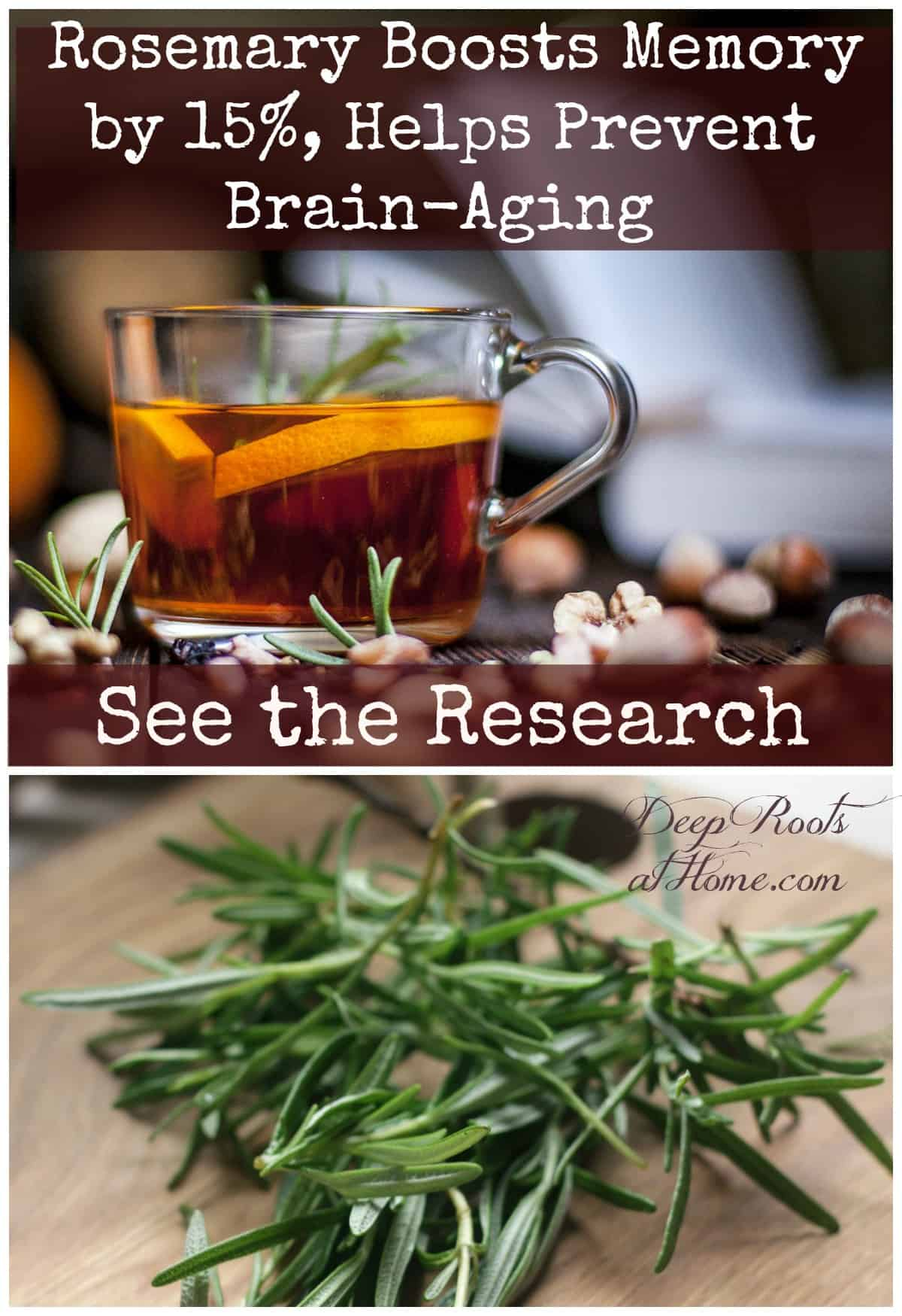 Rosemary Boosts Memory by 15%, Prevents Brain-Aging Says the Science. Rosemary tea and rosemary herb in bloom and cut