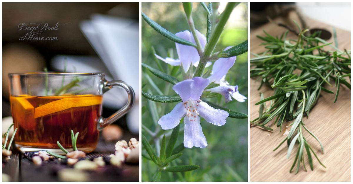 Rosemary boosts memory