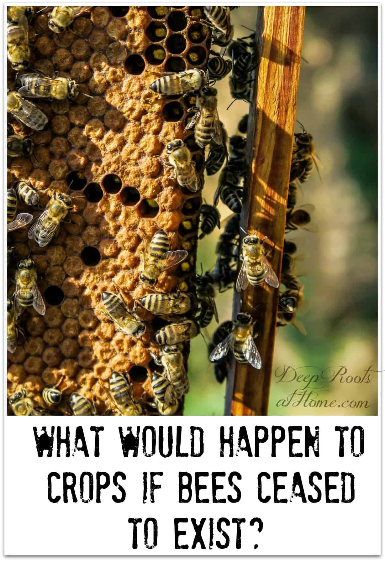 What Would Happen To Crops If Bees Ceased To Exist? Save the Bee image