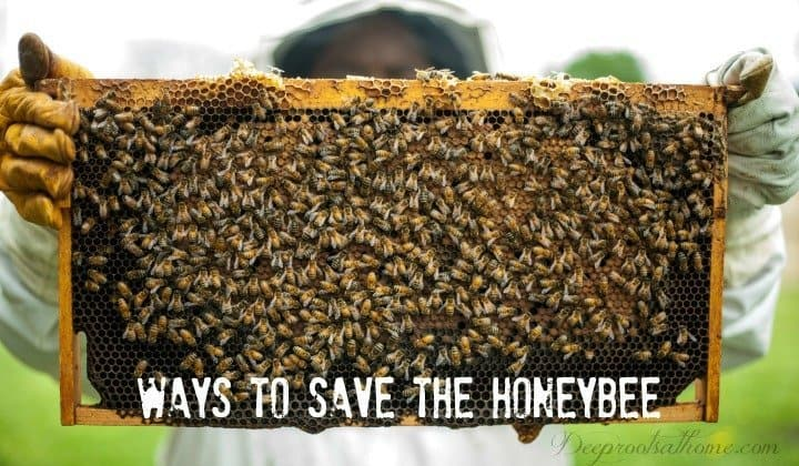 What Would Happen To Crops If Bees Ceased To Exist? Beekeeper holding up bee frame
