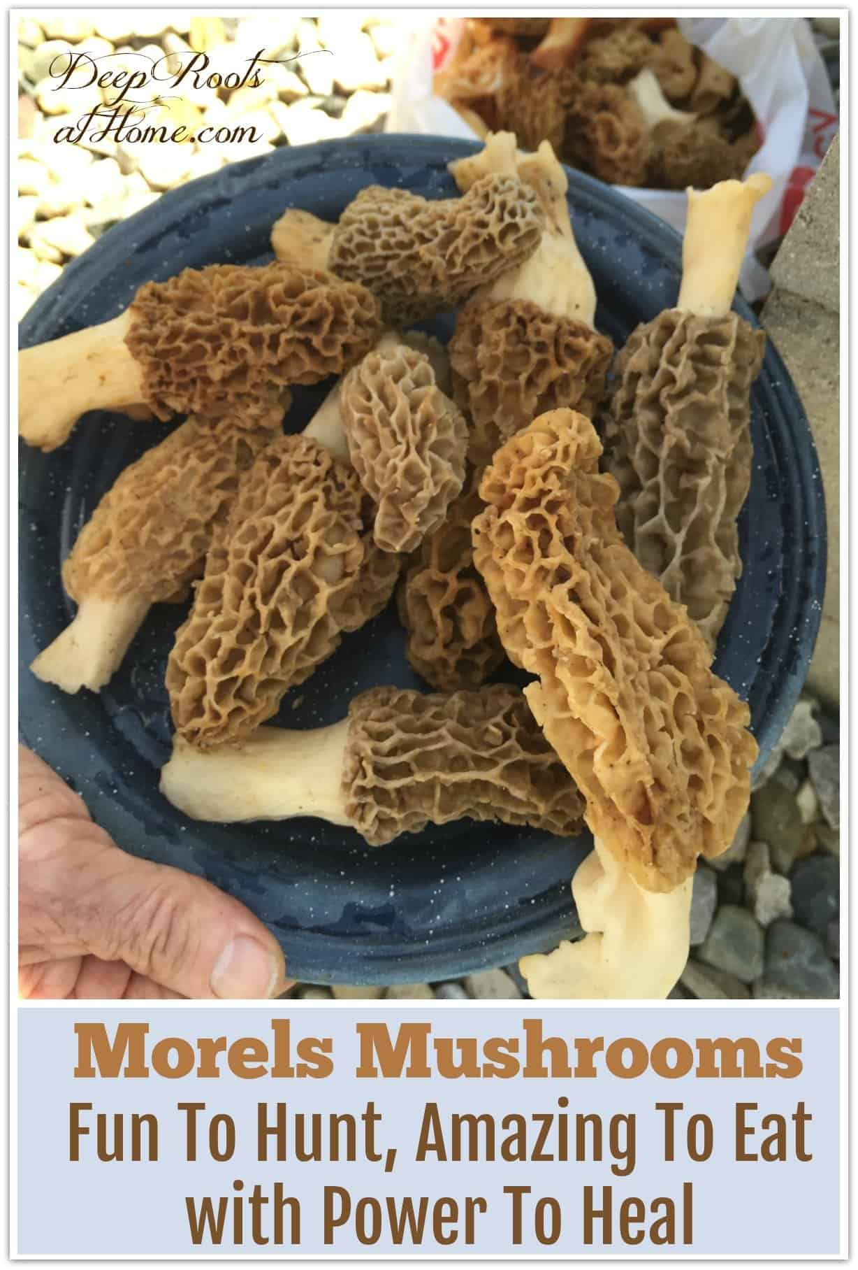 a plate of morchella mushrooms