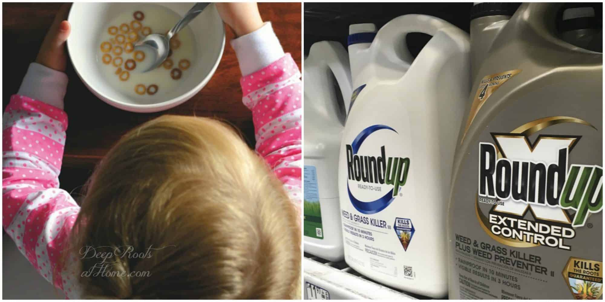 The Many Ways Roundup (Glyphosate) Can Kill You. chemicals in cereal and on lawns