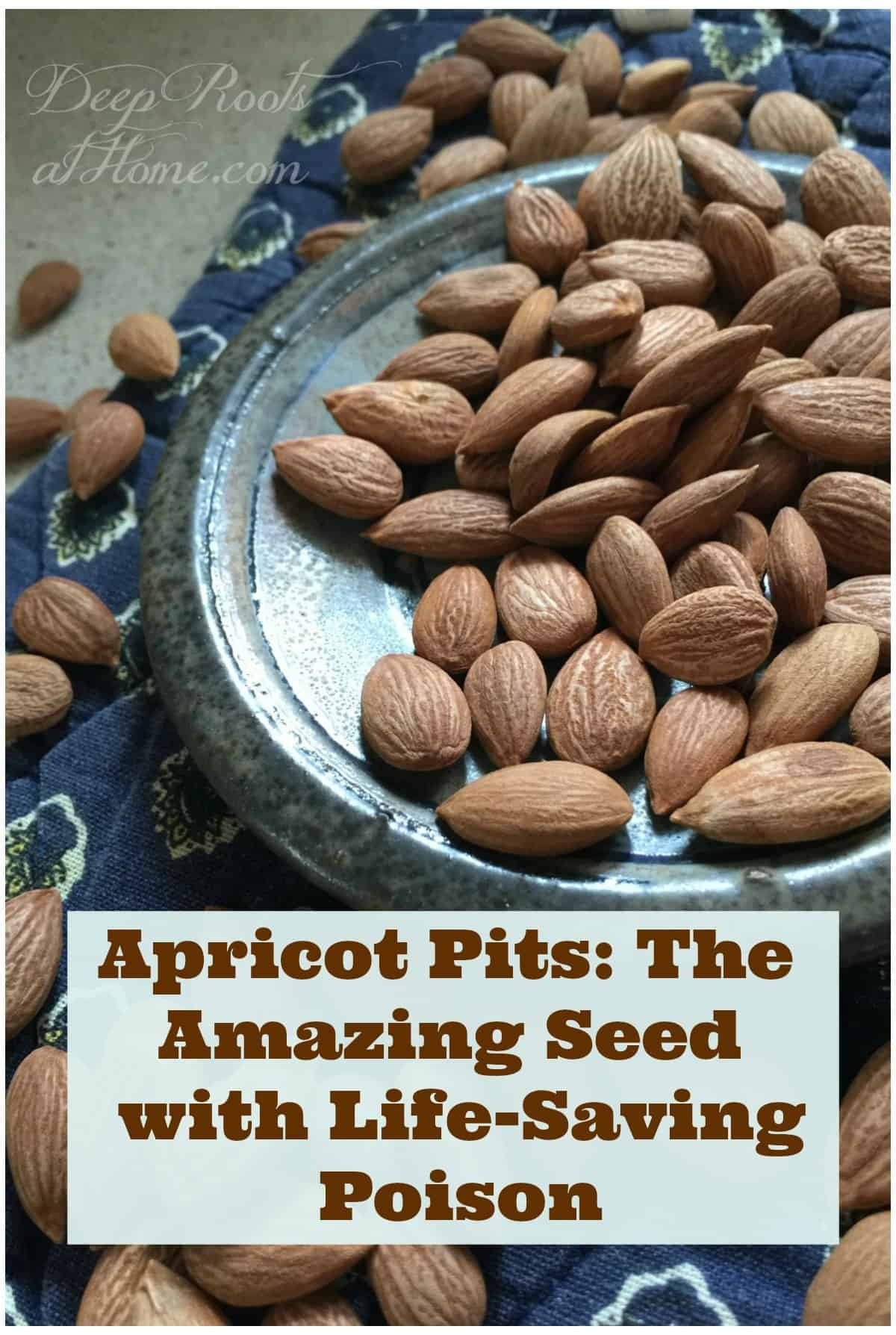 Apricot Pits The Amazing Seed with Life-Saving Poison. seeds or pits