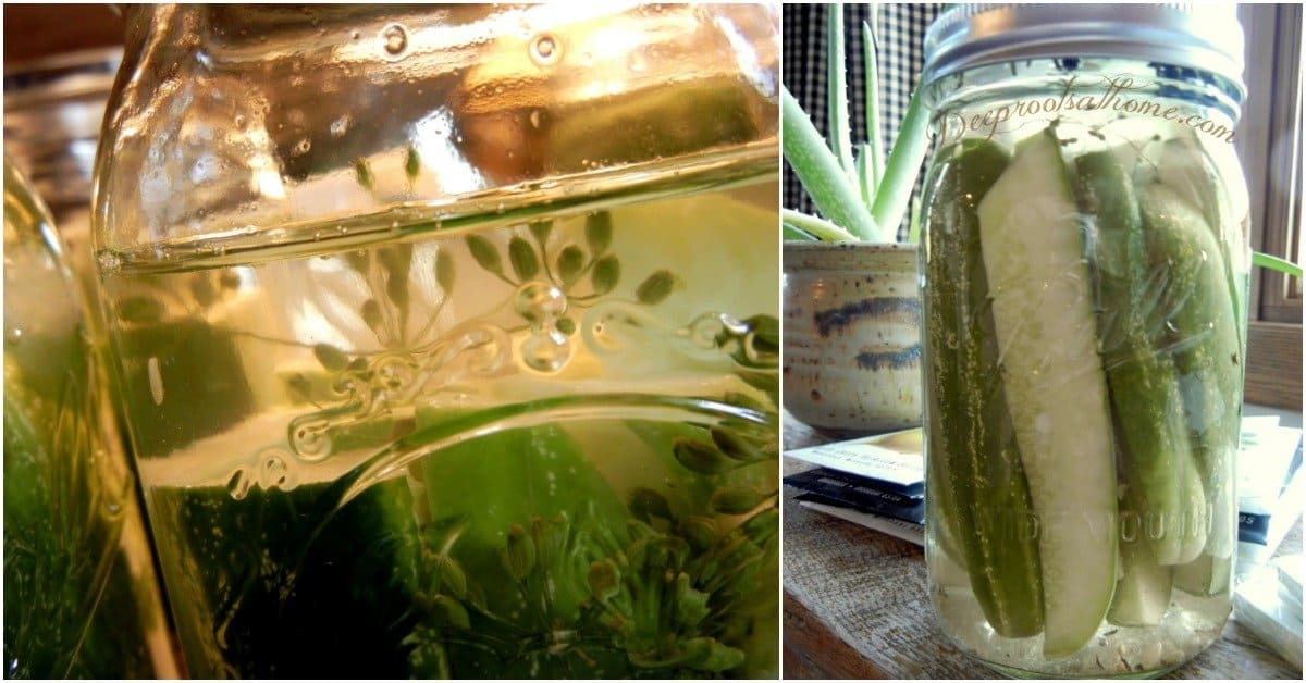 Making Refrigerator Pickles: Easy! No Canning, No Fermenting! pickles