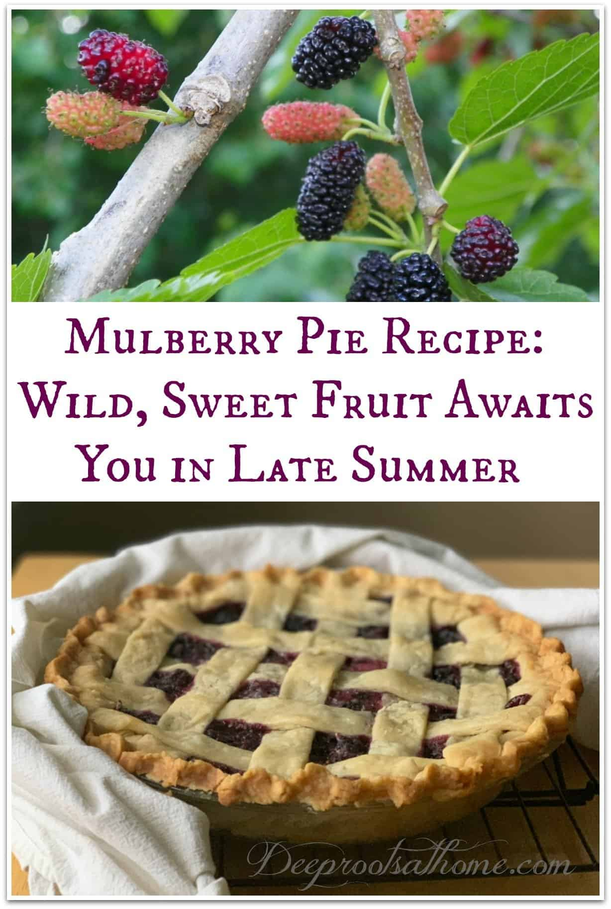 Mulberry Pie Recipe: Wild Sweet Fruit Awaits You in Mid-Late Summer