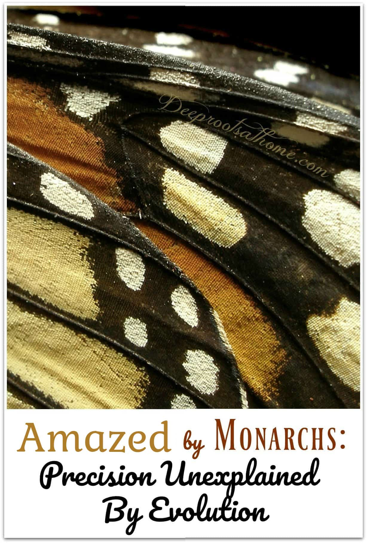 Amazed by Monarchs: Precision Unexplained By Evolution. wings